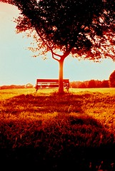 That bench again... (Trapac) Tags: light shadow summer england tree film silhouette bench downs bristol lomo xpro lomography crossprocessed fuji lomolca slidefilm ra lightshadow sensia thedowns 100iso fujisensia wmh omo bristoldowns lomoroll3 explored cliftondown fujira