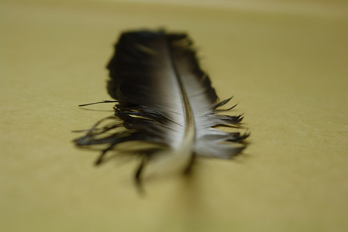 A New Feather
