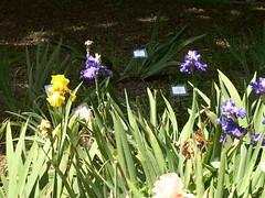 ortobotanico 170 (blum1) Tags: alberi fiori piante ortobotanico