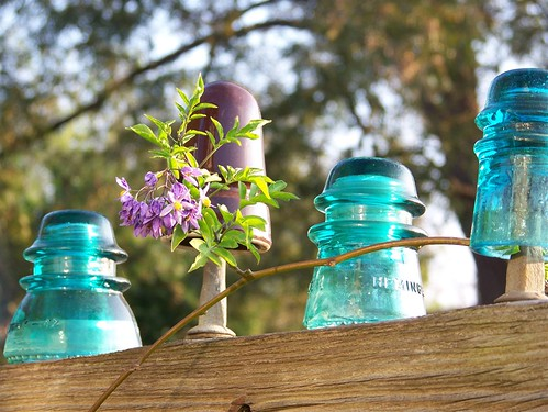 Fall sun on insulators and flower