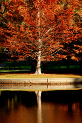 fall makes me dream (CiaoChessa) Tags: park autumn red urban reflection tree fall boston geotagged interestingness interesting nikon map massachusetts explore geotag bostoncommon publicgarden explored superhearts monicalshulman copyrightmonicalshulman fallseemedtocomeabitlatethisyear itsbeensobeautifulout thesecolorsinspire
