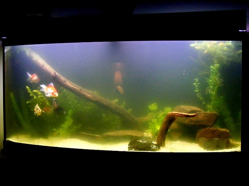 My 72g Bow Front Fish Tank