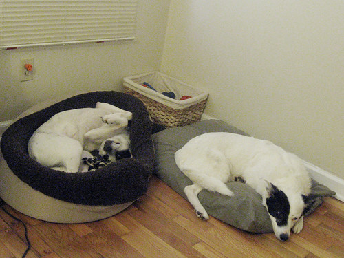 sleepydogs2.jpg
