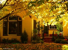 Sari Sonbahar.... (Mine Beyaz) Tags: door autumn light shadow house tree fall window leaves yellow ev sari kapi agac yapraklar golge isik sonbahar yaprak pencere abigfave platinumphoto anawesomeshot theperfectphotographer minebeyaz
