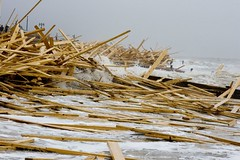 Got Wood? (Spicerman) Tags: wood sea beach sussex worthing westsussex cargo explore wreck iceprince