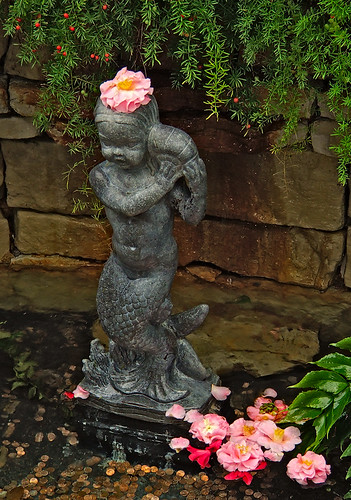 Missouri Botanical Gardens, in Saint Louis, Missouri - fountain statue in Linnaean House with camellias