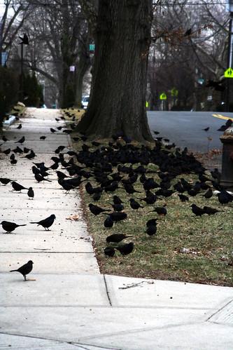 43/365 Bird Attack!