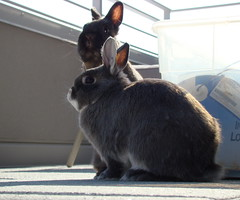 Excuse you! (misa/neb) Tags: bunnies frost rabbits fury