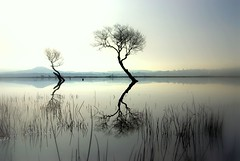 It takes 2 (Nicolas Valentin) Tags: reflection tree nature scotland scenery lochlomond mywinners 1nv