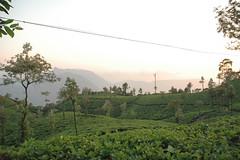 Refreshing Tea... (-Shyam-) Tags: kfm3