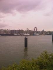 Aalscholver bidt op de Maas
