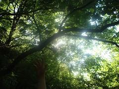 Trees (sotoz) Tags: water falls kozani kataraktes velvento metoxi aliakmonas belbento