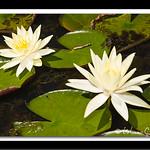 Jardim Botânico - SP thumbnail