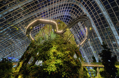 Cloud Forest Mountain V (henriksundholm.com) Tags: singapore southeast asia cloudforest conservatory greenhouse night reflections park garden coldmountain gardensbythebay gbtb paths greenery hdr city urban