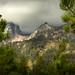 glimpse of storm peak through the trees