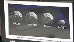 three normal sized brains, marked AFRICAN, EUROPEAN, ASIAN. One tiny brain, marked RACIST