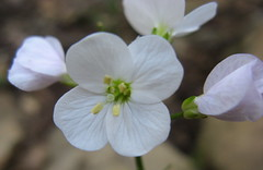 Tiny white flowers Photo