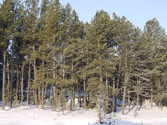 April Snow (Thundercheese) Tags: snow southdakota custer