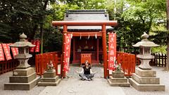 Meditating in Tsurugaoka Hachiman shinto shrine : Kamakura, Japan / Japn (Lost in Japan, by Miguel Michn) Tags: naturaleza verde green nature japan forest shrine kamakura religion bosque  shinto cultural santuario japn   sintoismo tsurugaokahachimang