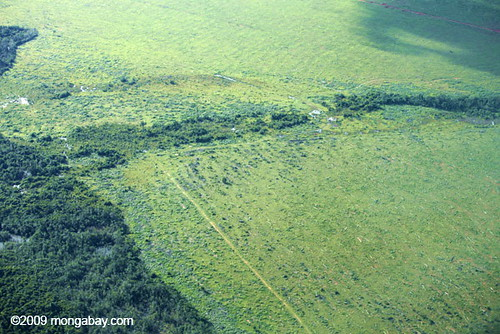 Cattle pasture in Amazon