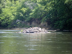 Saluda River Paddle-44