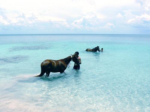 CABALLOS EN PROVIDENCIA / HORSES IN PROVIDENCE