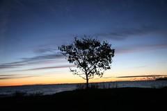 Sunrise in Kivik (dukematthew2000) Tags: blue tree silhouette yellow sunrise sweden winner ribbon myfavorites abigfave aplusphoto superbmasterpiece showmeyourqualitypixels