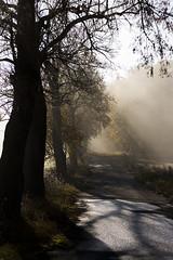 Hst (koinis) Tags: road autumn light mist fall fog forest canon john 50mm skog 18 hst vg dimma koinberg koinis
