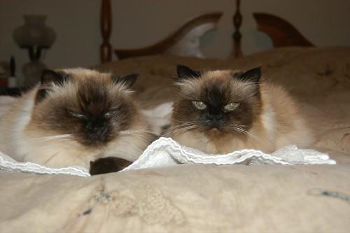 Precious and Bon Bon