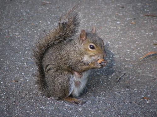 Lo scoiattolo che mangia il gelato