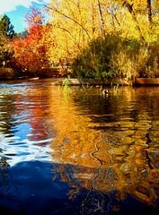 Every leaf speaks bliss to me, (LaTur) Tags: autumn reflection leaves colorado boulder dcist abigfave colorphotoaward diamondclassphotographer lickrdiamond amazingamateur