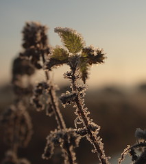 Frosty Bits (torimages) Tags: winter ice sunrise frost sd allrightsreserved naturesfinest donotusewithoutwrittenconsent copyrighttorimages