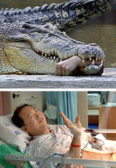 9 croc wanted his hand