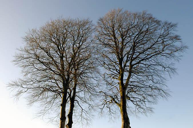 DSC_6363 Two Trees web