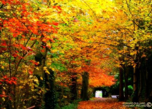 سحر الطبيعة في ايرلندا 2201840821_0292fce952.jpg?v=0