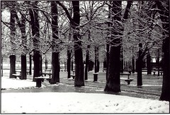 Paris jardin du Luxembourg sous la neige (hugues mitton) Tags: park trees winter blackandwhite white snow paris france cold tree blancoynegro noiretblanc hiver nieve jardin bank 100views 400views 300views 200views neige 500views luxembourg arbre blanc froid frio banc 800views 600views 700views 1000views jardinduluxembourg parcduluxembourg marronnier 900views 1100views luxembourgpark blackwhitephotos