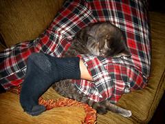 Eva wrapped around my leg