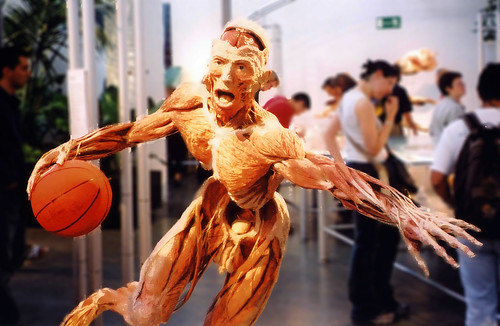 Body Worlds Basketball Man by Paul Stevenson.