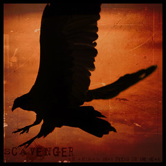 Scavenger silhouette - Dictionary of Image (s0ulsurfing) Tags: light red orange usa sunlight black bird art texture birds silhouette illustration america photoshop wow square death design graphicdesign interesting scary blood wings artwork graphic bright image artistic florida awesome fear unitedstatesofamerica flight creative january beak silhouettes dramatic manipulation ps eerie minimal explore creation american gore definition tropical layers dread vulture jupiter buzzard gliding simple drama 2008 fla dictionary tropics squared blackvulture claws soar fiery scavenger southflorida talons glide ciconiiformes instantfave s0ulsurfing newworldvultures thedictionaryofimage leschick