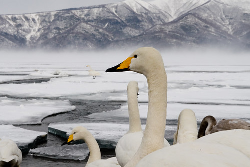 Kushiro Lake