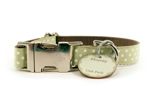 Murray's New Collar & Tag