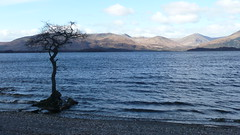 Millarochy Bay, Loch Lomond (patersor) Tags: trees bay loch lomond millarochy tz3