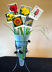 Vase of Flowers (Pockets1) Tags: plants jason flower colour green collage lumix town panasonic multi polariod  fz8 pca21 pockets1 jasontown