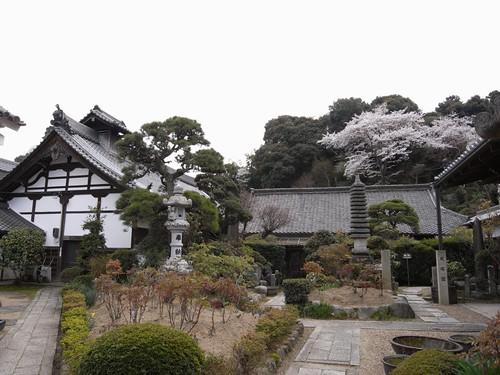 当麻寺(桜)-08