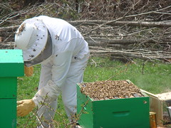 Checking the surviving hive