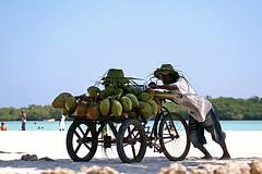Trabajo duro / Hard work (rvsv - Rodolfo) Tags: ocean republica sea color beach mar sand republic chica coconut vivid playa arena coco dominicana boca domincan isawyoufirst