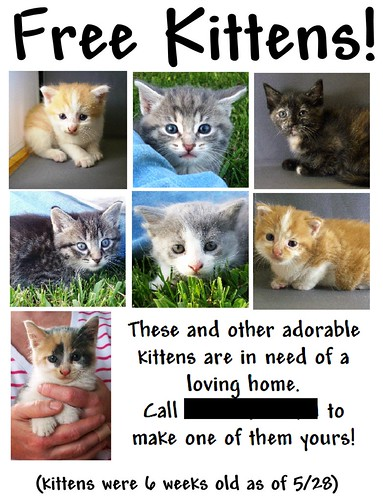 My Free Kitten Flyer