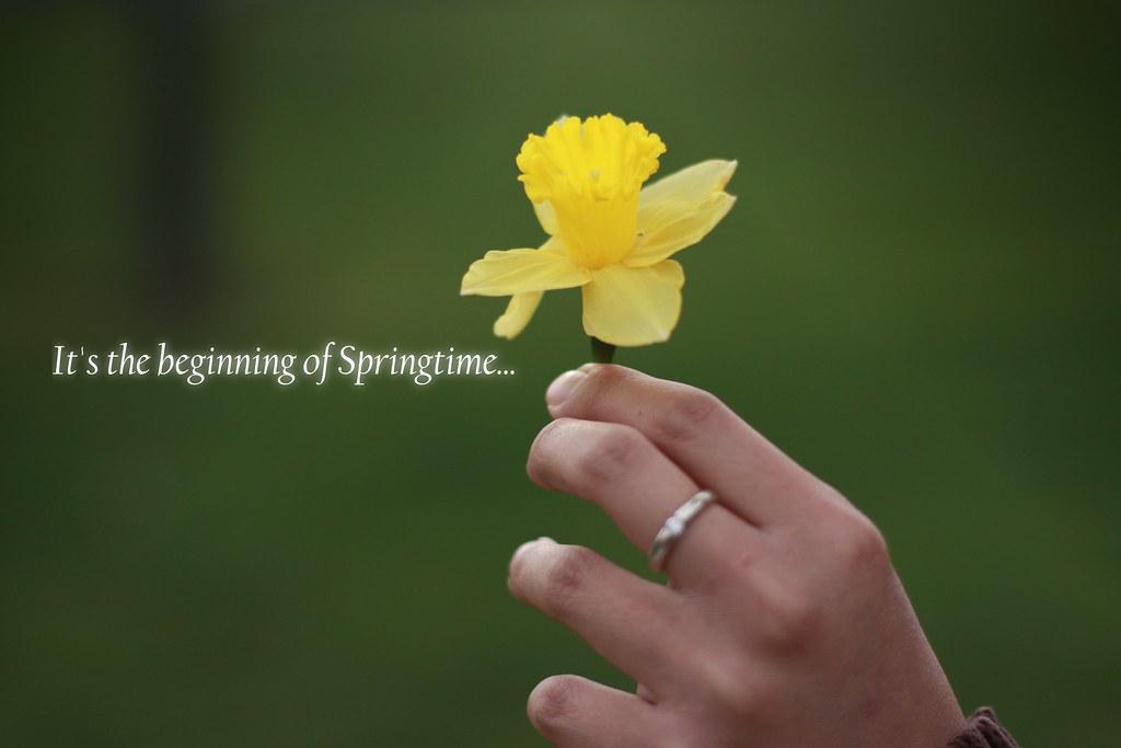 daffodil6