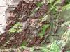 Carte du canyon de Purcaraccia et de Punta Malanda