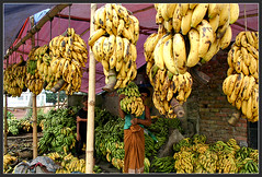 A tale from the Land of Gold - II [..Narayanganj, Bangladesh..] (Catch the dream) Tags: green yellow market bongo stock banana business bengal bangladesh bangla prosperity bengali supplier bangladeshi bangali commodities narayangonj fotogezgin catchthedream gettyimagesbangladeshq2